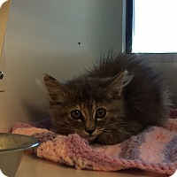 Adopt A Pet :: Sugar - Edgewood, NM