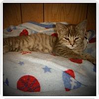 Adopt A Pet :: ESME - Medford, WI