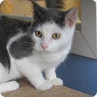 Adopt A Pet :: Max - Northfield, MN