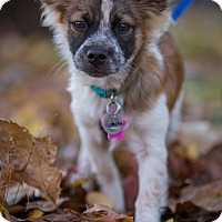 Adopt A Pet :: Pistachio: Adoption Pending - Verona, NJ