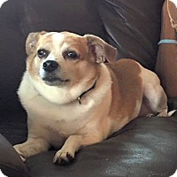 Adopt A Pet :: Sadie - Savannah, GA