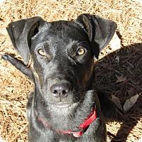 Adopt A Pet :: Happy Howie - Harrisonburg, VA