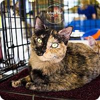 Adopt A Pet :: A..  Betty - Mooresville, NC