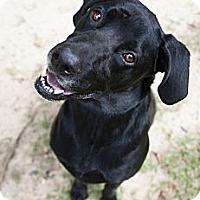 Adopt A Pet :: Wrigley - Huntersville, NC