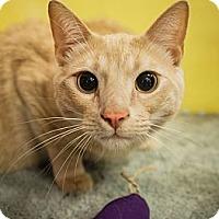 Adopt A Pet :: Baby - Long Beach, CA