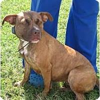Adopt A Pet :: Rosie - Pompano Beach, FL