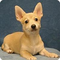 Adopt A Pet :: Wolfie - Sacramento, CA
