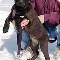 Adopt A Pet :: Teddy (AE) - Staunton, VA