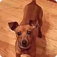 Adopt A Pet :: Penny Lane - Columbus, OH