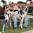 Adopt A Pet :: Ruger