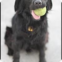 Adopt A Pet :: Marley - Yorba Linda, CA