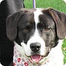 Adopt A Pet :: Barney - PENDING