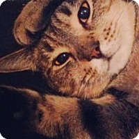 Adopt A Pet :: MISHU - Ridgewood, NY