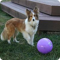 Adopt A Pet :: Hutch - Mission, KS