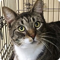 Adopt A Pet :: Mike - Medford, MA