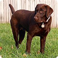Adopt A Pet :: Reda - Maryville, TN