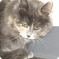 Adopt A Pet :: Minnie - Ridgway, CO