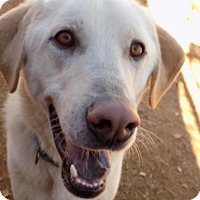 Adopt A Pet :: Brawny-ADOPTED 2/5/16 - Apple Valley, CA