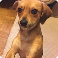 Adopt A Pet :: Max - Andalusia, PA