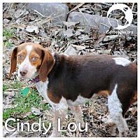 Adopt A Pet :: Cindy Lou - Novi, MI