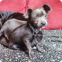 Adopt A Pet :: Bob - San Jose, CA