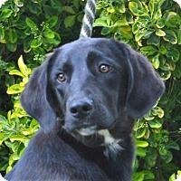 Adopt A Pet :: **CJ** MEET JUNE 11TH! - Mukwonago, WI