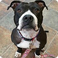 Adopt A Pet :: Johnson - Lisbon, OH