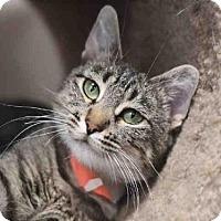 Adopt A Pet :: PEARL - Murray, UT