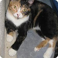 Adopt A Pet :: Annie - Sherman Oaks, CA