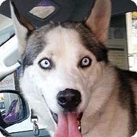 Adopt A Pet :: BORIS - Poway, CA