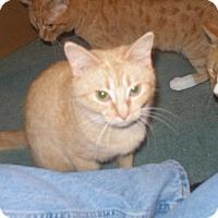 Adopt A Pet :: Pandora - Rochester, MN