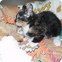 Adopt A Pet :: Octavia - Clarksville, AR