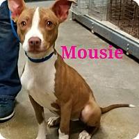 Adopt A Pet :: Mousie - Culver City, CA