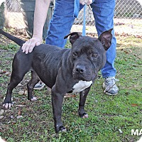 Adopt A Pet :: Matilda - Washington, GA