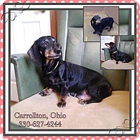 Adopt A Pet :: # 2 STRAY Avail. 2/22 - Carrollton, OH