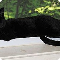 Adopt A Pet :: Annisette (Annie) - N. Berwick, ME