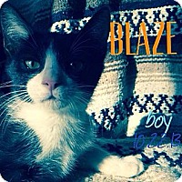Adopt A Pet :: Blaze - Silver Lake, WI