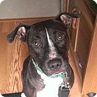 Adopt A Pet :: Ruby - Shavertown, PA