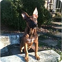 Adopt A Pet :: Fun-loving Radford - Fulton, MD