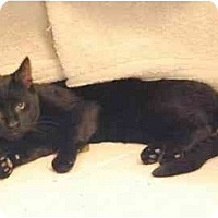 Adopt A Pet :: Holden - Colmar, PA