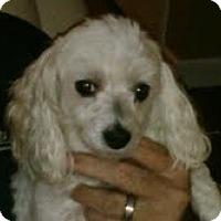 Adopt A Pet :: Lady - Homewood, AL