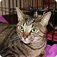 Adopt A Pet :: Jaguar (LE) - Little Falls, NJ
