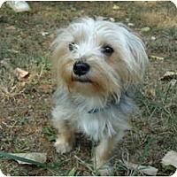 Adopt A Pet :: Benson - Allentown, PA