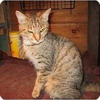 Adopt A Pet :: Trina - Portland, ME
