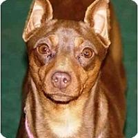 Adopt A Pet :: Coco - Topeka, KS
