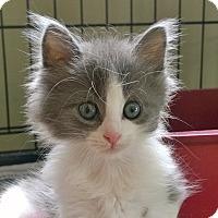 Adopt A Pet :: Fester - Island Park, NY
