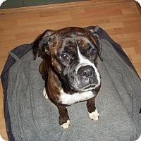 Adopt A Pet :: Komono - Kenilworth, NJ