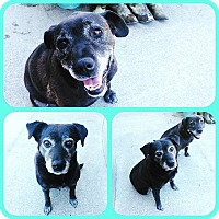 Adopt A Pet :: Daisy and Maddie - McKenna, WA