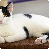 Adopt A Pet :: Casey - St Louis, MO