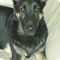 Adopt A Pet :: Trigger - Brattleboro, VT